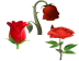 Rose Life Cycle Cursors